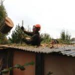 Topkapning i drivhus