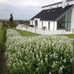 I dette minimalisktiske design, står de hvide storkenæb som baghavens blomsterflor, mens forhavens bede dækkes af den hvide Rosa 'White cover', Mørke granitbelægninger og husets sorte tag. Komtrastfyldt og enkelt.